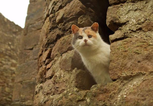 gato-ciego-rescatado-excursiones-stevie-irlanda-5