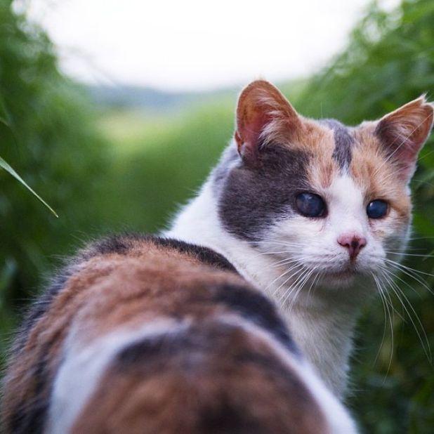 gato-ciego-rescatado-excursiones-stevie-irlanda-9
