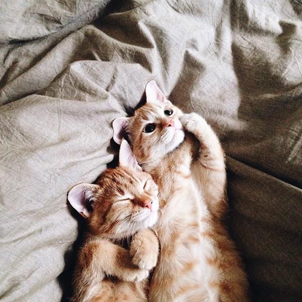 gatos-hermanos-huerfanos-rescatados-anyagrapes-13