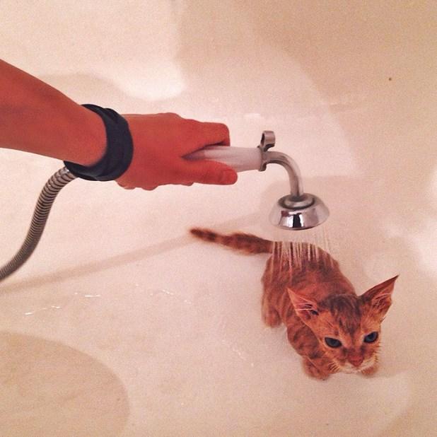 gatos-hermanos-huerfanos-rescatados-anyagrapes-3