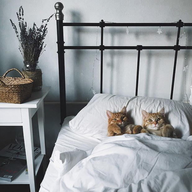 gatos-hermanos-huerfanos-rescatados-anyagrapes-4