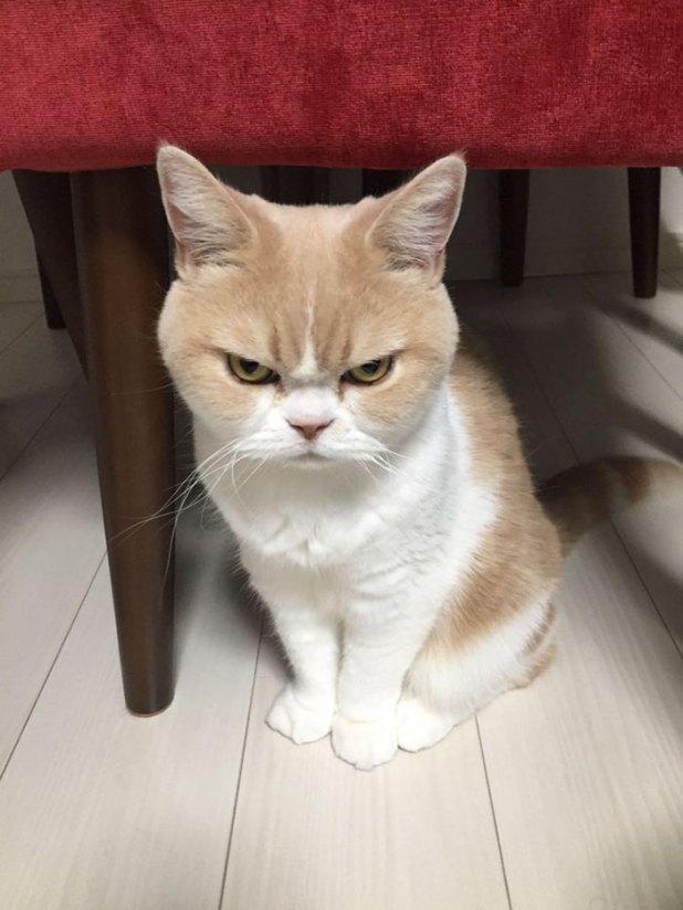koyuki-gato-enfadado-japones-5