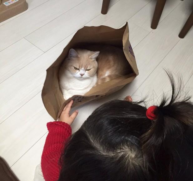 koyuki-gato-enfadado-japones-9