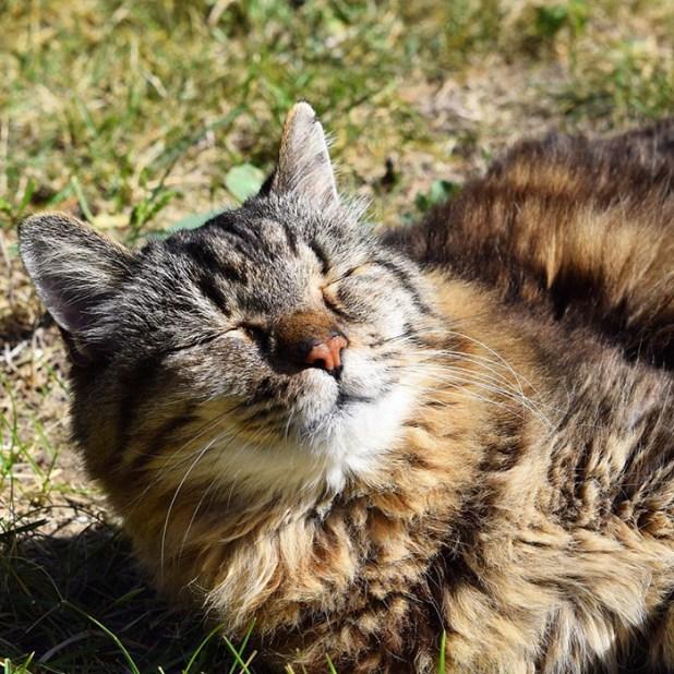 record-gato-viejo-mundo-corduroy-9