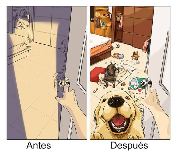 vida-antes-despues-perro-maimai-john-6