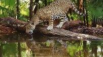 Fauna Belize