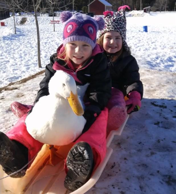 amistad-animal-pato-snowflake-kylie-brown-6