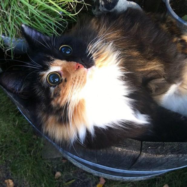 gato-ciego-quimera-adoptado-jasmine-sandra-coudray-3