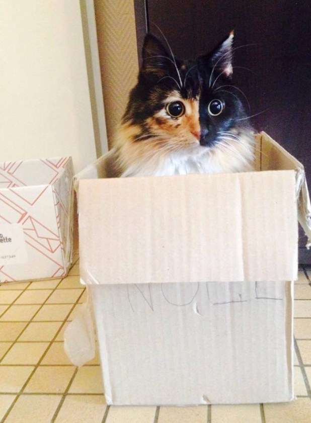 gato-ciego-quimera-adoptado-jasmine-sandra-coudray-9