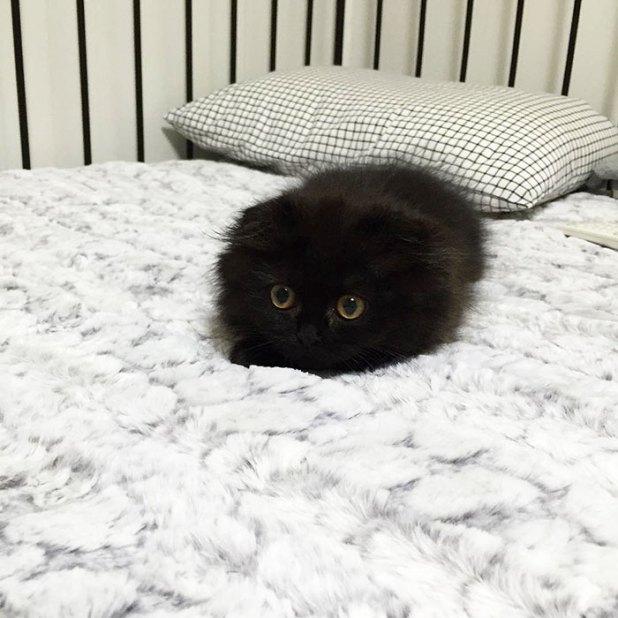 gato-negro-adorable-ojos-grandes-gimo-1