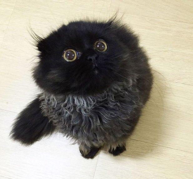 gato-negro-adorable-ojos-grandes-gimo-12