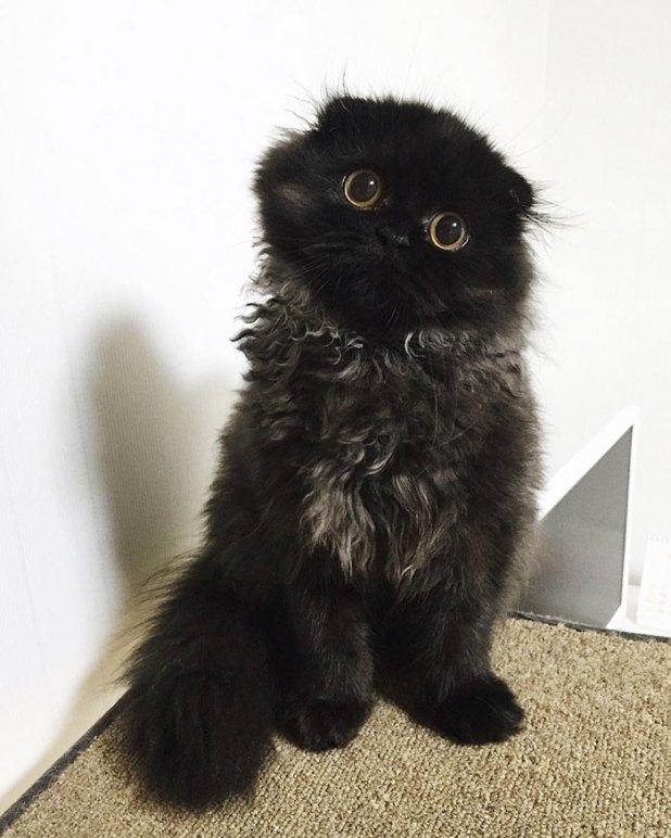 gato-negro-adorable-ojos-grandes-gimo-13