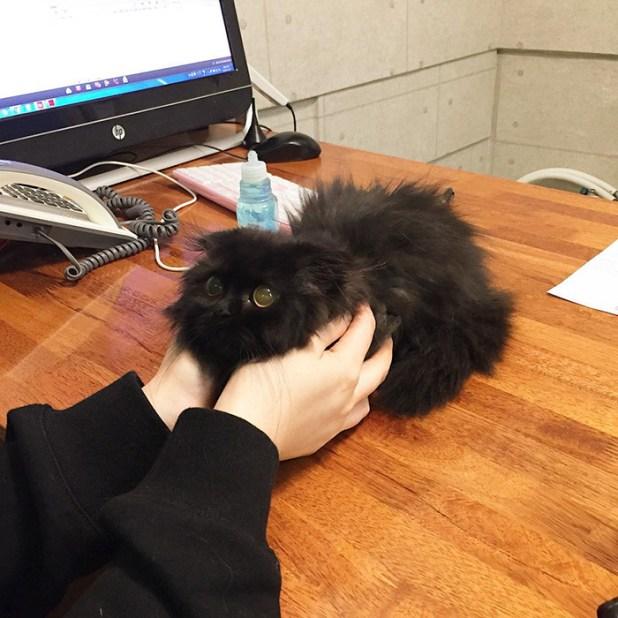 gato-negro-adorable-ojos-grandes-gimo-5