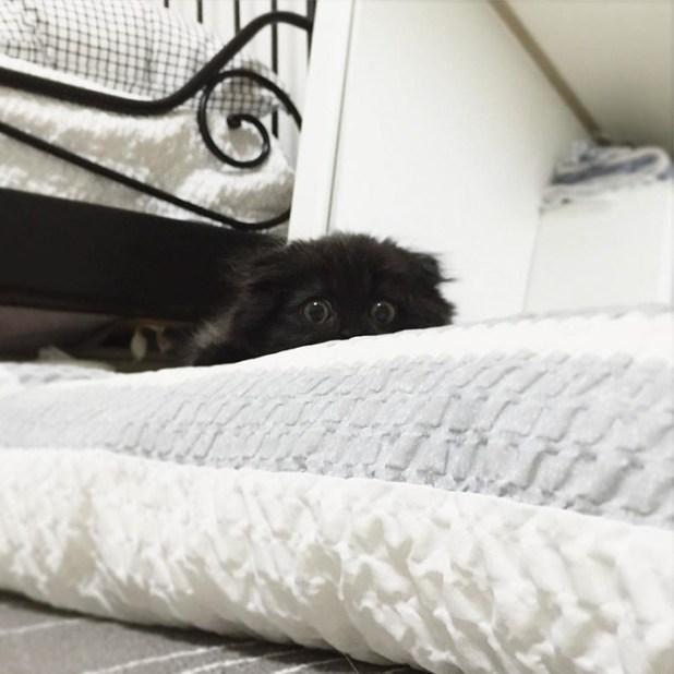 gato-negro-adorable-ojos-grandes-gimo-8