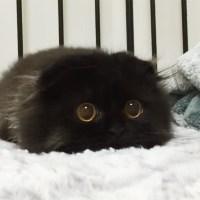 Gimo El Gato Con Los Ojos Más Grandes Y Tiernos Que Puedas Ver