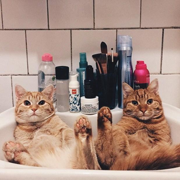 gatos-hermanos-huerfanos-rescatados-anyagrapes-2