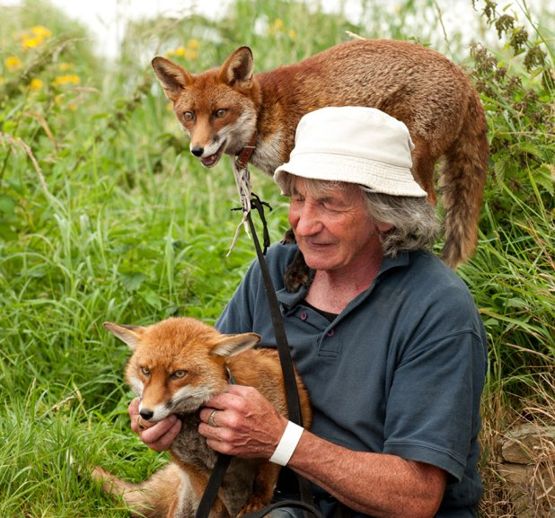 zorros-rescatados-patsy-gibbons-irlanda-2