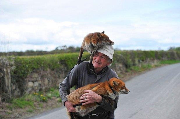 zorros-rescatados-patsy-gibbons-irlanda-6