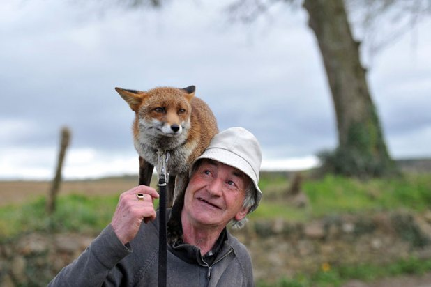 zorros-rescatados-patsy-gibbons-irlanda-7