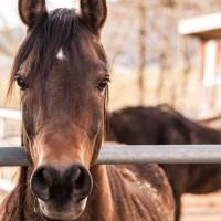 Elche: Club Escuela de Equitacion DELVIC
