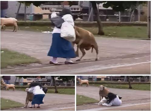 cabra 1
