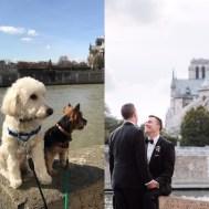 Dog-Wedding-3