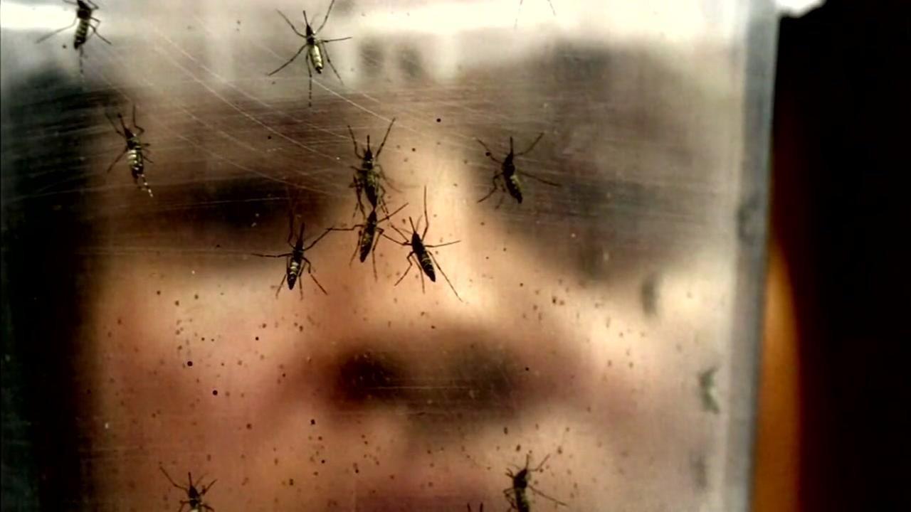 Confermato caso di Zika, e sospetta Chikungunia
