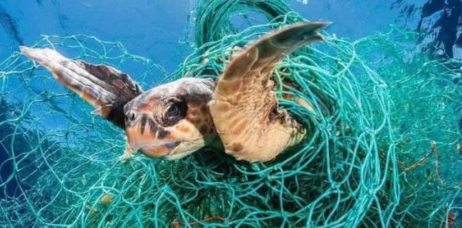 Tartaruga marina che, come altri animali marini, troppo spesso resta impigliata nei grossi pezzi di plastica e ferendosi o morendo nel tentativo di liberarsi.