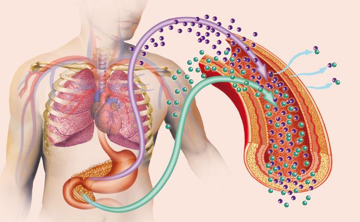 Schematizzazione grafica del ruolo dell'insulina nella gestione delle molecole di glucosio.