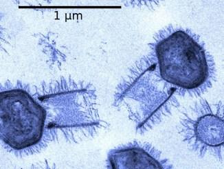 Suoli antartici: identificati tramite viromica i driver ambientali che guidano la composizione della comunità virale