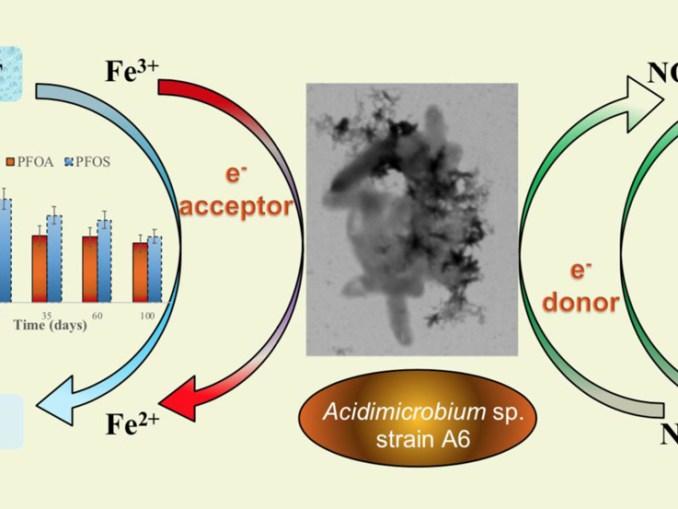 Primo microorganismo della storia capace di degradare i composti fluorurati