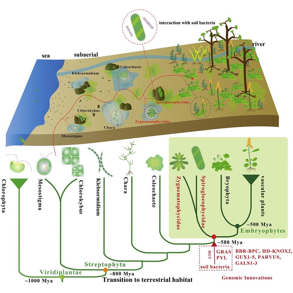 Le piante emergendo dalle acque e colonizzando la terraferma si sono differenziate in straordinarie specie resilienti ai cambiamenti climatici.