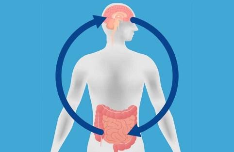 Figura 3 - Asse intestino / cervello