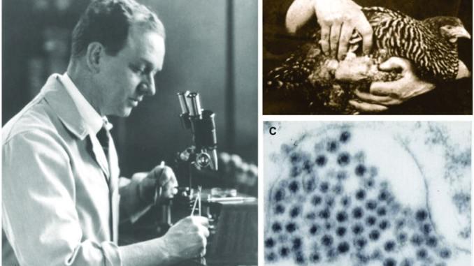 Francis Peyton Rous e il virus del sarcoma di Rous