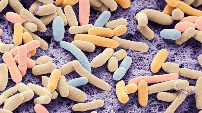 ceppo E.coli modificato