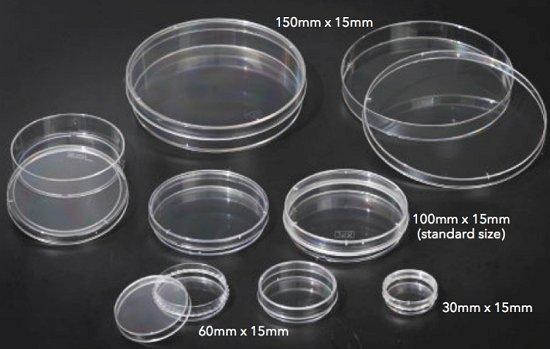 Capsule Petri di diversa grandezza