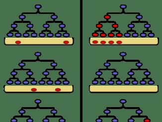 Teorie adattativa e mutazionale