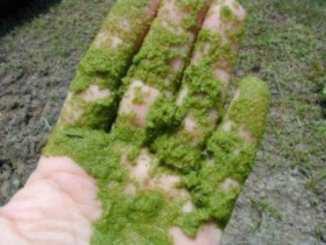 Depurazione delle acque reflue grazie alle microalghe