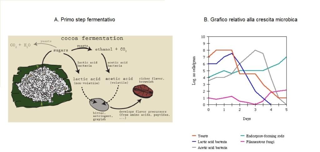 grafico fermentazione cacao