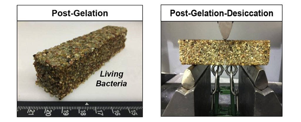 mattone di cianobatteri e sabbia, prototipo di cemento vivo