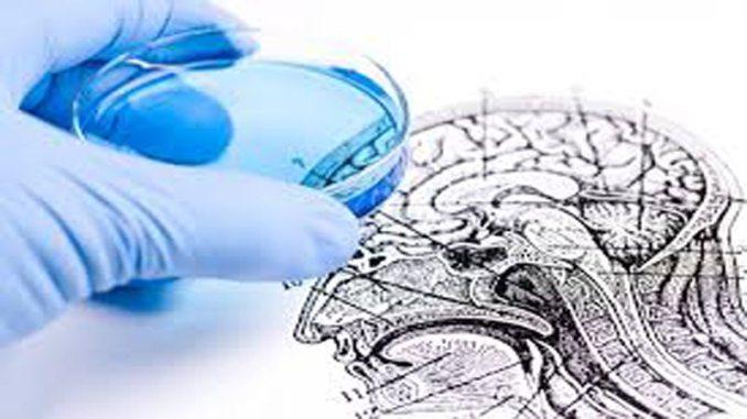 infezioni cervello