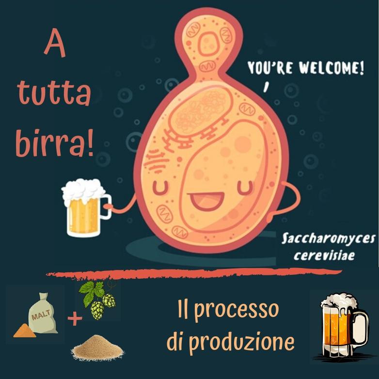 Il processo di produzione della birra - il secondo articolo della rubrica A tutta birra di Microbiologia Italia