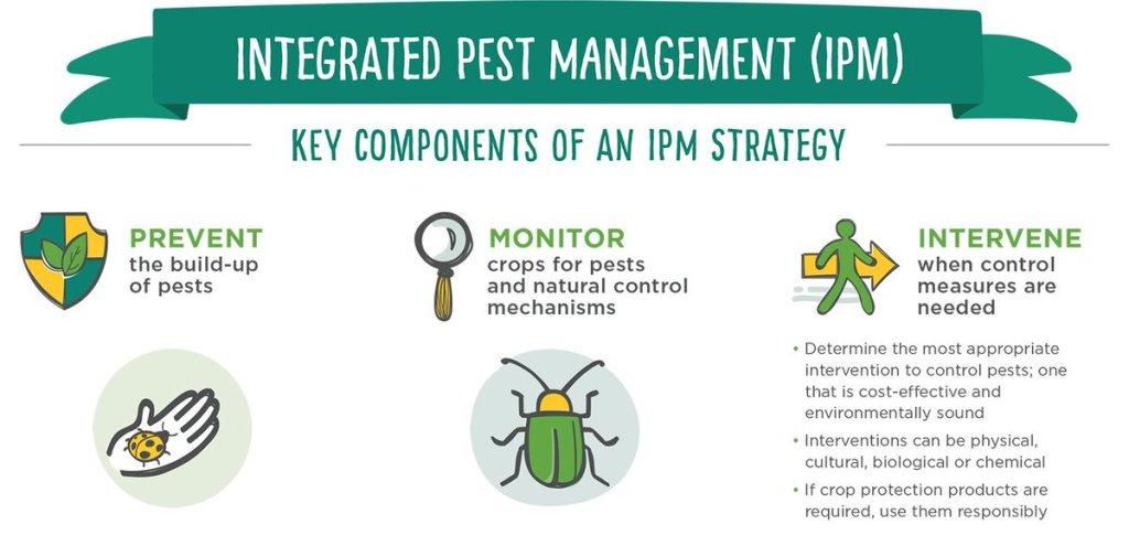 Gli step essenziali dell'integrated pest management (IPM