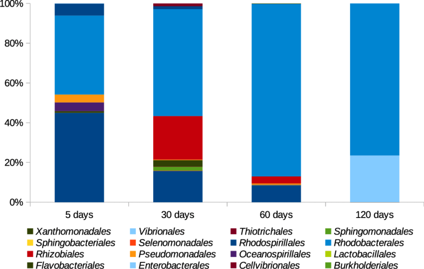Rappresentazione grafica del biofilm. Il gruppo di ricerca ha tradotto l'abbondanza dei batteri in OTU, riferiti a ciascun Ordine e rappresentati in percentuale