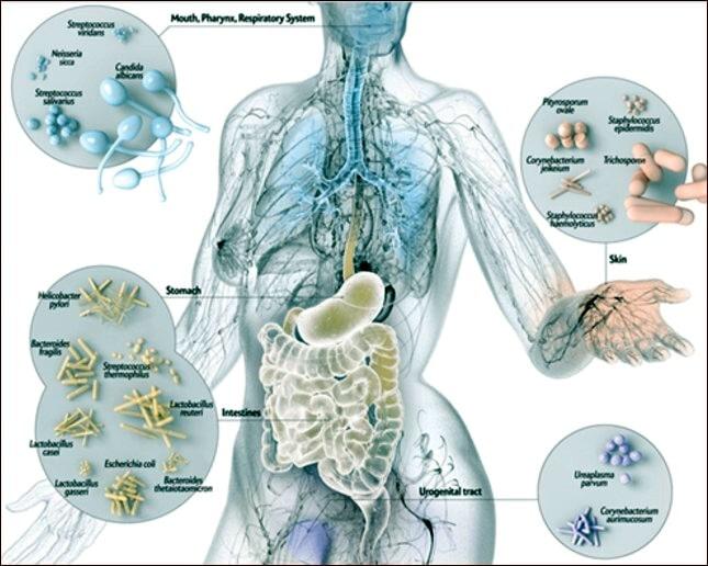 presenza di batteri in visione anatomica