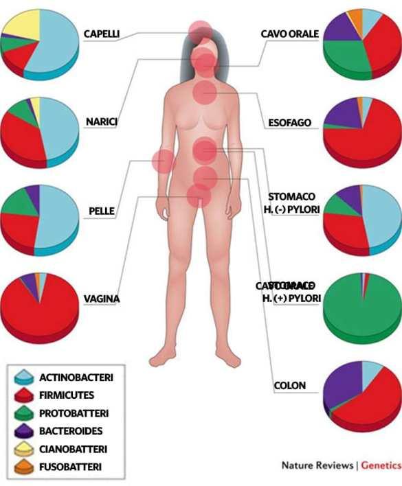 percentuali batteriche presenti sul corpo