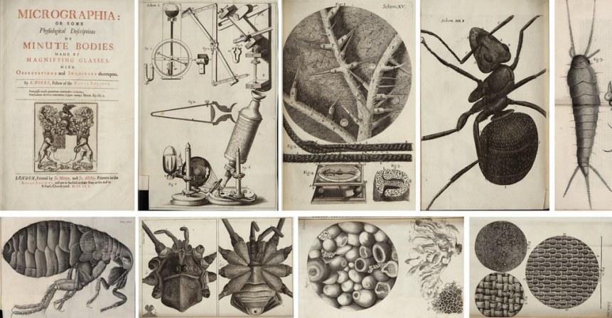 Frontespizio ed alcune illustrazioni contenute in Micrographia