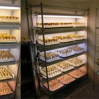 A Napoli la più grande ceppoteca al mondo di microalghe estremofile