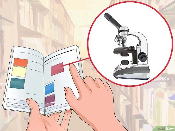 Colorazioni in microscopia ottica: vademecum generale