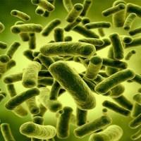 Probiotici e prebiotici: miti e realtá da svelare